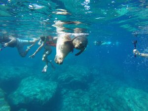 Enjoy a Snorkel Day Trip