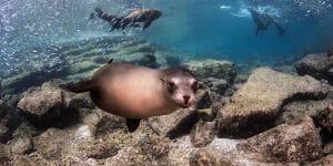 Espiritu Santo/Sea Lion Snorkeling